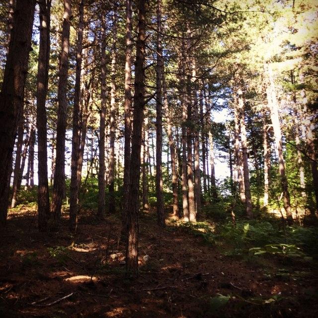 Skiritida_Forest_Vlachokerasia_02