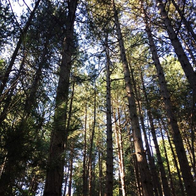 Skiritida_Forest_Vlachokerasia_03