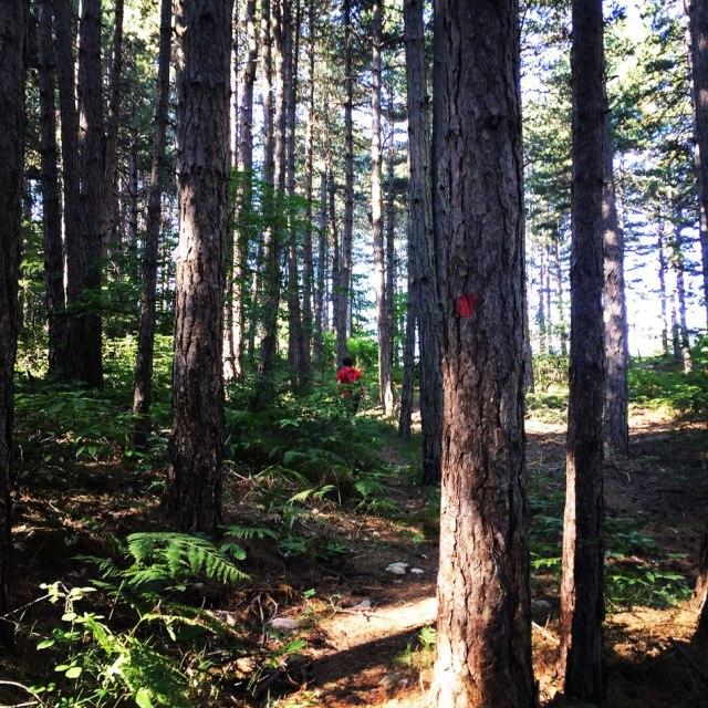 Skiritida_Forest_Vlachokerasia_04