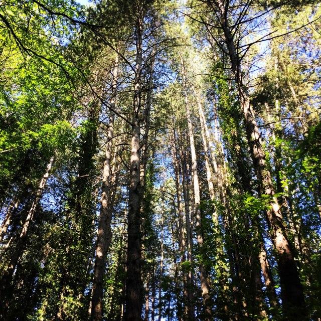 Skiritida_Forest_Vlachokerasia_08