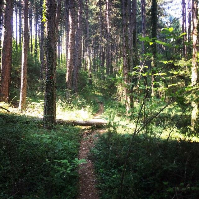 Skiritida_Forest_Vlachokerasia_09