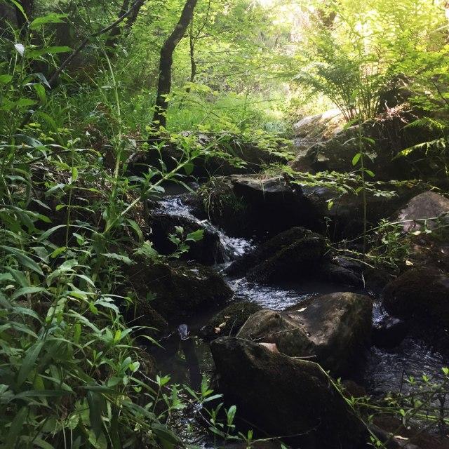 Skiritida_Forest_Vlachokerasia_15