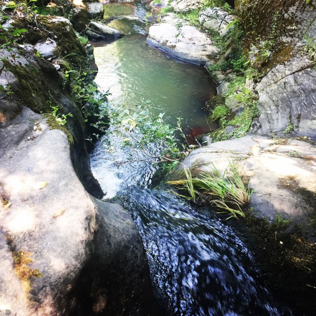 Skiritida_Forest_Vlachokerasia_18