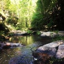 Skiritida_Forest_Vlachokerasia_20