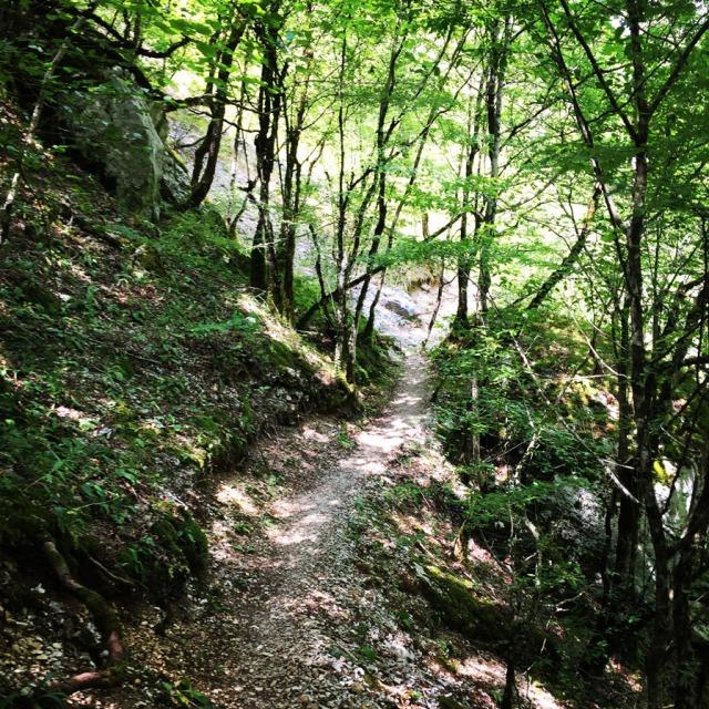 Mount_Tymfi_(Pindos)_Thru-Hike_Part_01_Kapesovo_Mezaria_Gorge_Vikos_Canyon_Mikro-Papingo_0626
