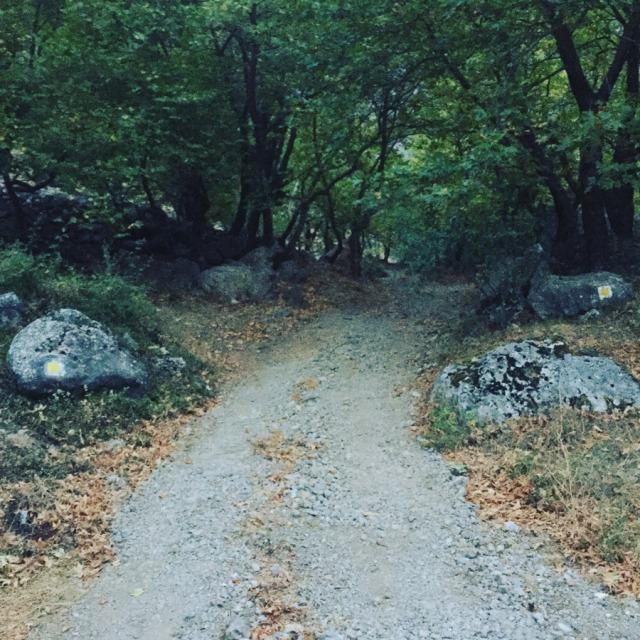 Mount_Aselinon_Giona_Karagianni_2017_1476