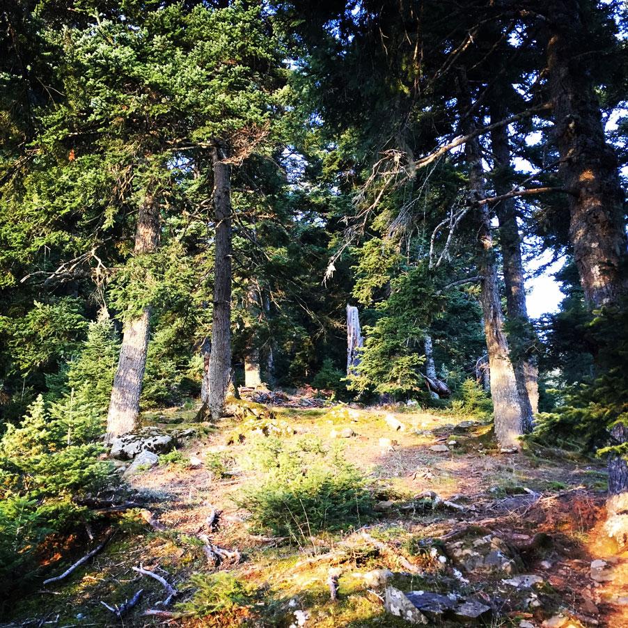 Agrafa_Svoni_Pouli_Papadimitri_Hiking_3442