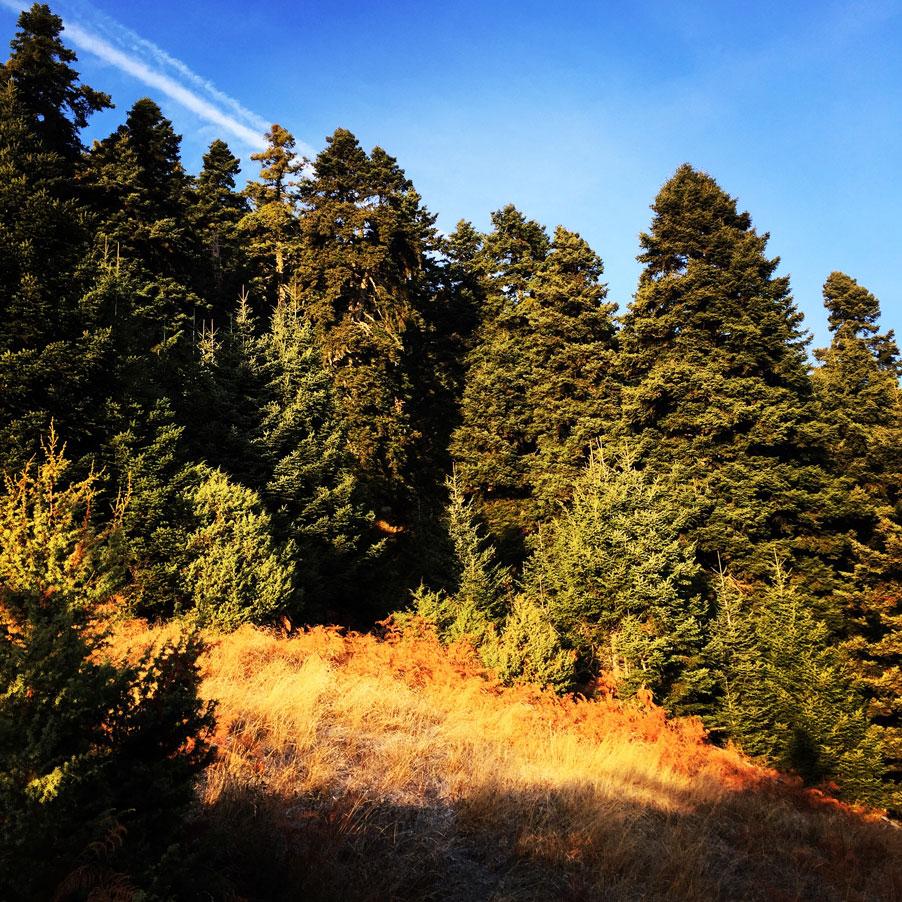 Agrafa_Svoni_Pouli_Papadimitri_Hiking_3443