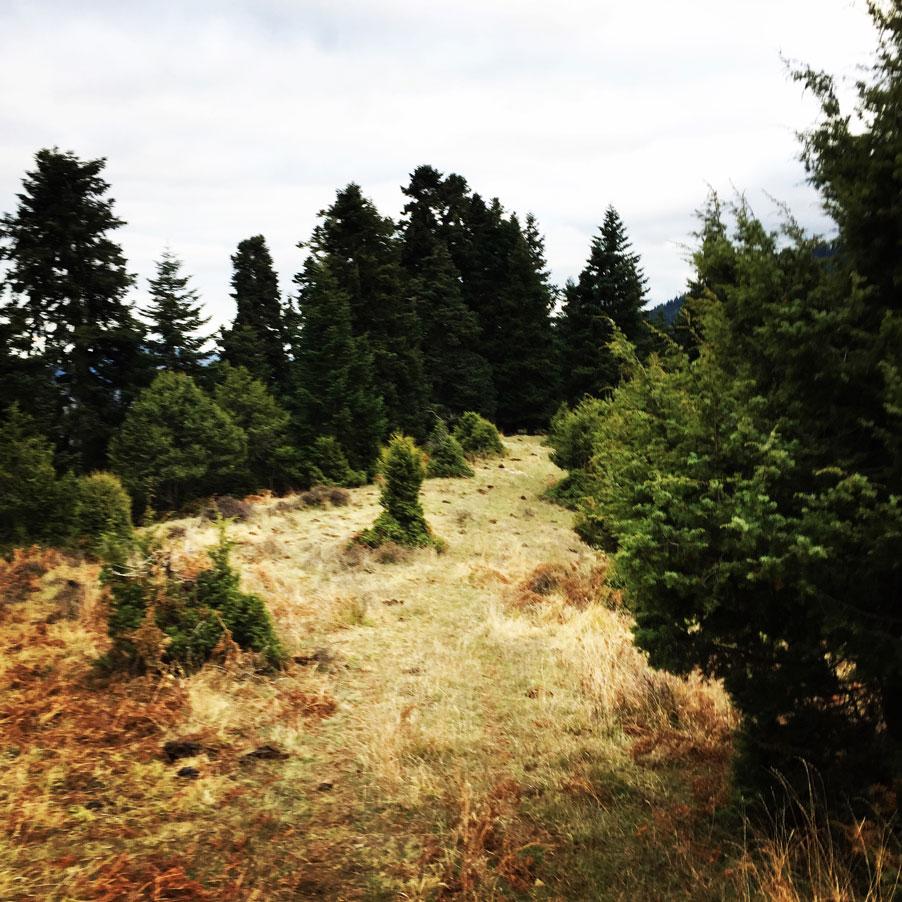 Agrafa_Svoni_Pouli_Papadimitri_Hiking_3481