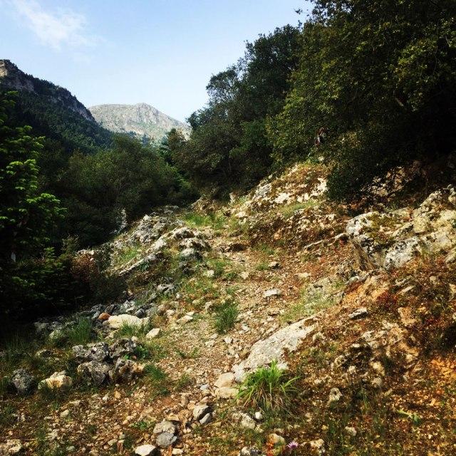 Mount_Oligyrtos_Chionotripa_Grimini_7829
