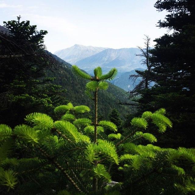 Mount_Oligyrtos_Chionotripa_Grimini_7837