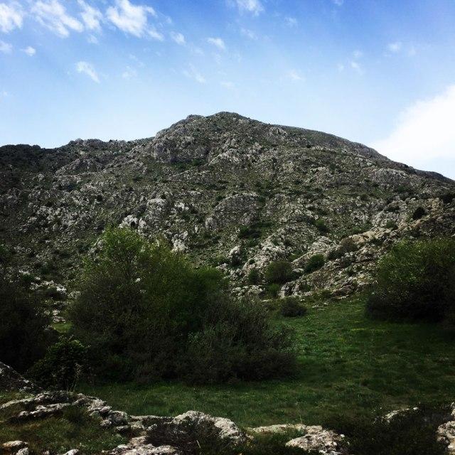 Mount_Oligyrtos_Chionotripa_Grimini_7845