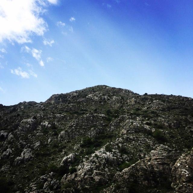 Mount_Oligyrtos_Chionotripa_Grimini_7846