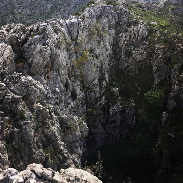 Mount_Oligyrtos_Chionotripa_Grimini_7847