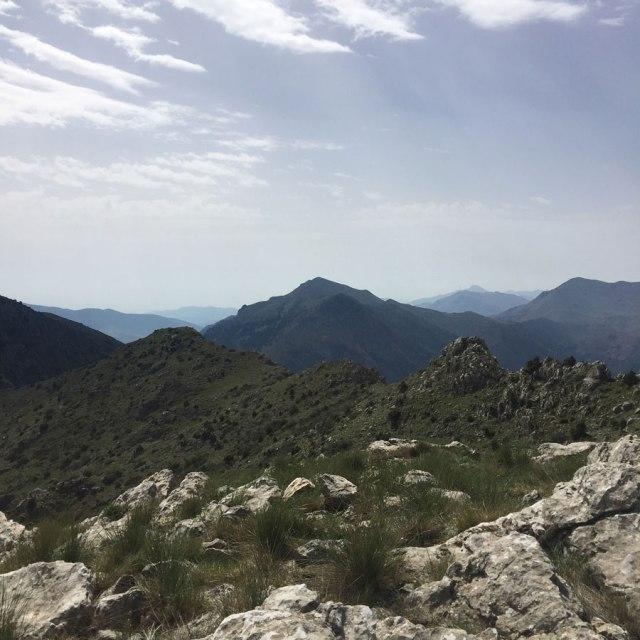 Mount_Oligyrtos_Chionotripa_Grimini_7855