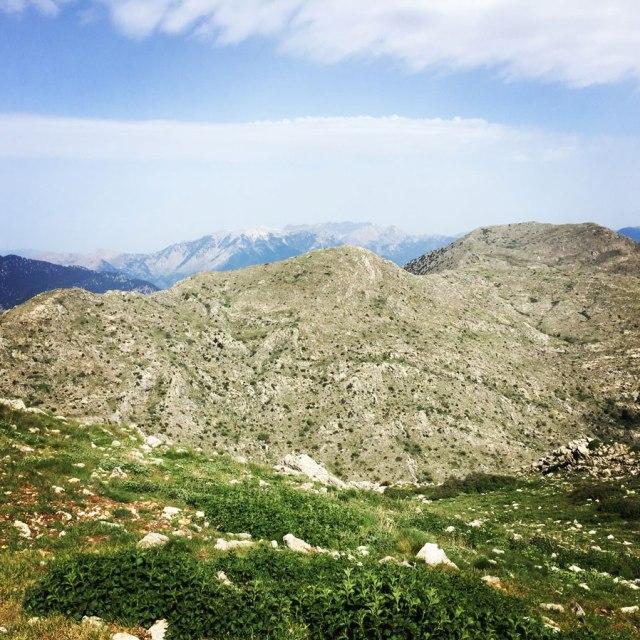 Mount_Oligyrtos_Chionotripa_Grimini_7859