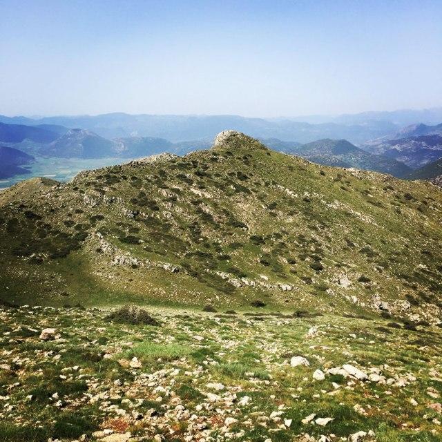 Mount_Oligyrtos_Chionotripa_Grimini_7860