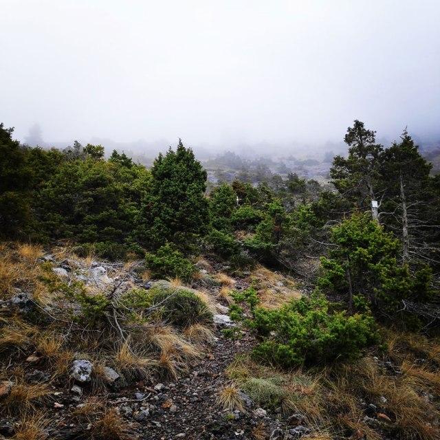 Mainalo_Menalo_Mountain_Ostrakina-Mavri_Koryfi_Travere_20181125_201426_660