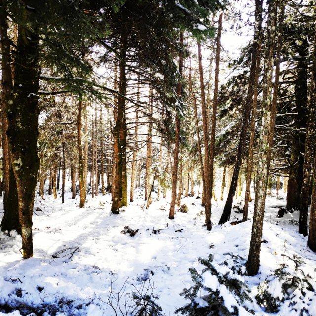 Winter_Hiking_Parnitha_20181230_103943_447