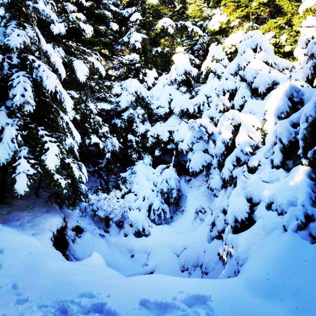 Winter_Hiking_Parnitha_20181230_104307_312