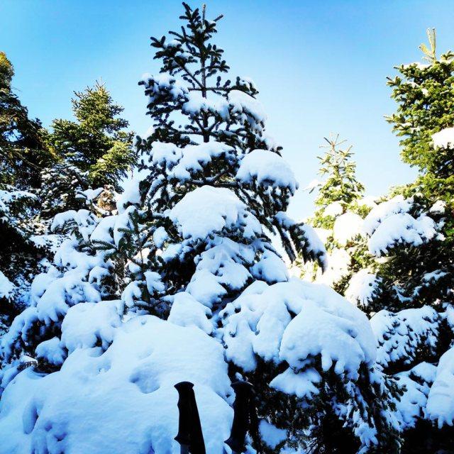 Winter_Hiking_Parnitha_20181230_104402_440