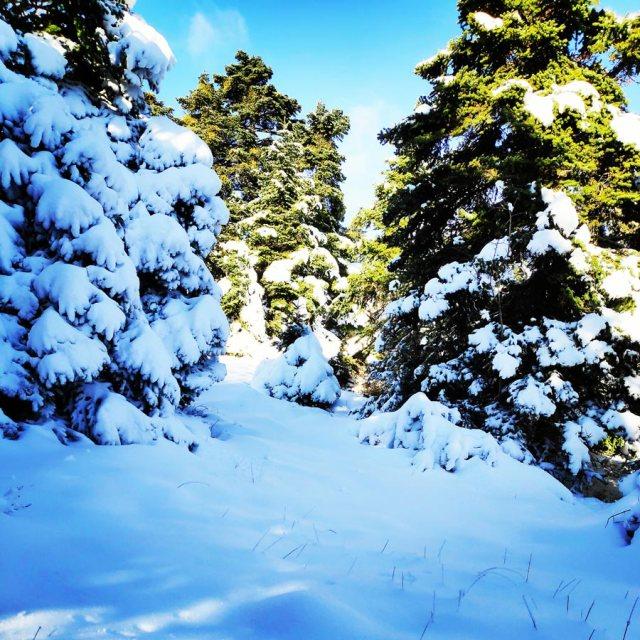 Winter_Hiking_Parnitha_20181230_104555_968
