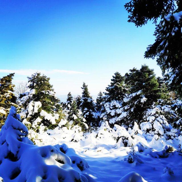 Winter_Hiking_Parnitha_20181230_104618_985