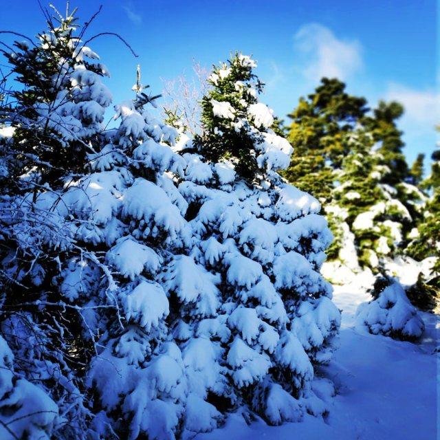 Winter_Hiking_Parnitha_20181230_104640_594
