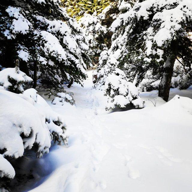 Winter_Hiking_Parnitha_20181230_104949_815