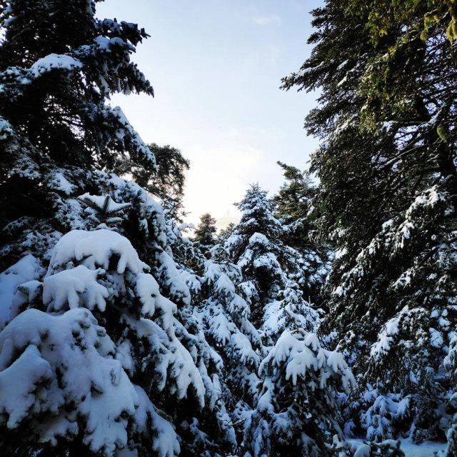 Winter_Hiking_Parnitha_20181230_105010_315