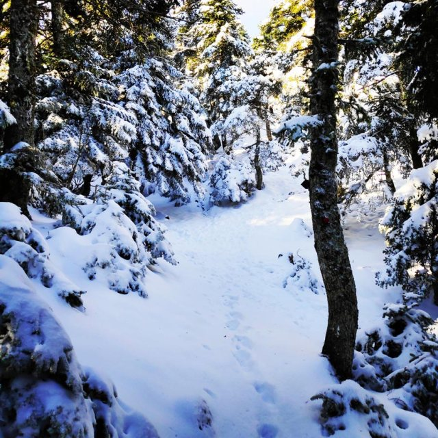 Winter_Hiking_Parnitha_20181230_105047_435