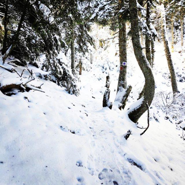 Winter_Hiking_Parnitha_20181230_105119_885