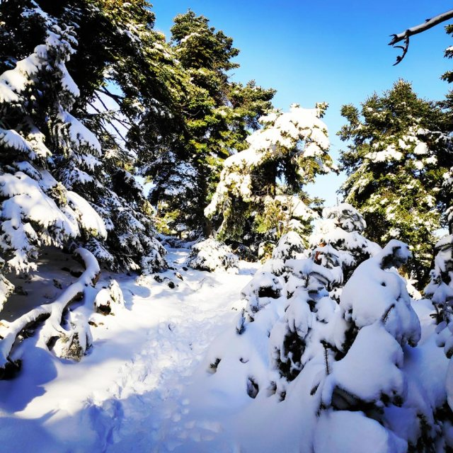 Winter_Hiking_Parnitha_20181230_105246_987