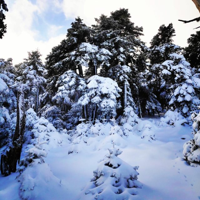 Winter_Hiking_Parnitha_20181230_105304_295