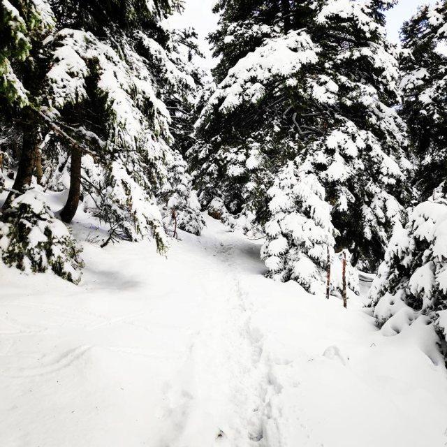 Winter_Hiking_Parnitha_20181230_105331_524