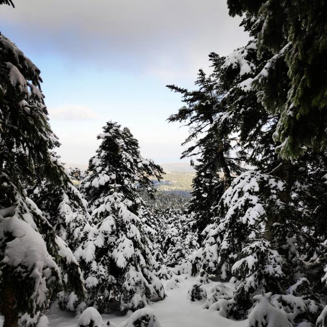 Winter_Hiking_Parnitha_20181230_105349_112