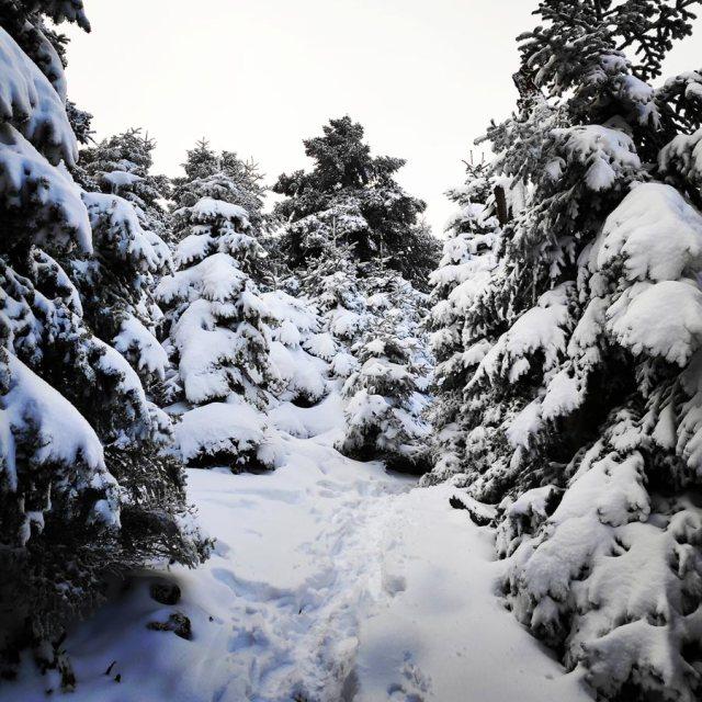 Winter_Hiking_Parnitha_20181230_105419_573