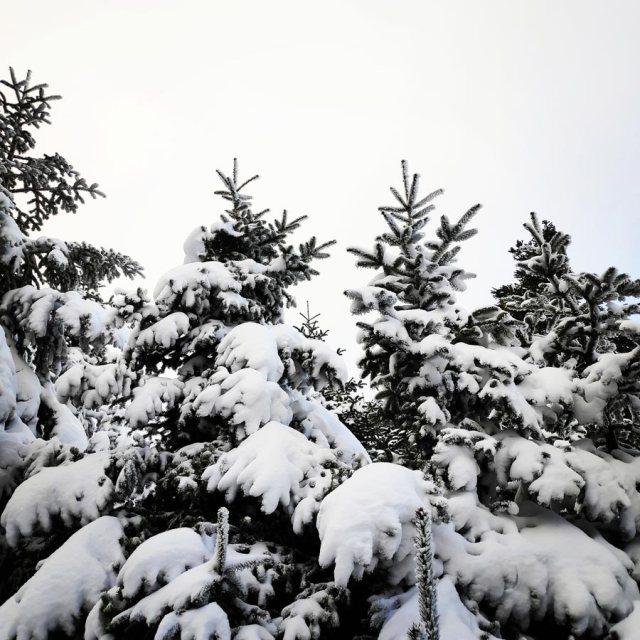 Winter_Hiking_Parnitha_20181230_105606_653
