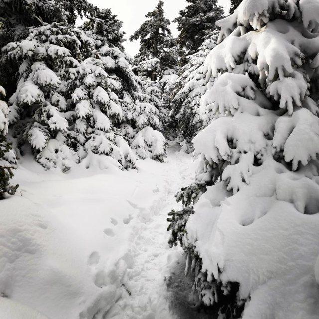 Winter_Hiking_Parnitha_20181230_105643_331