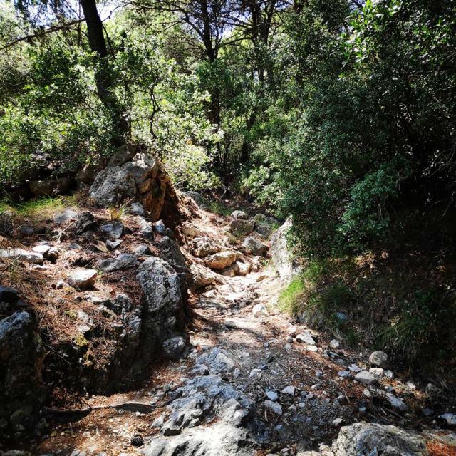 Climbing_Korakofolia_Parnitha__080550_063
