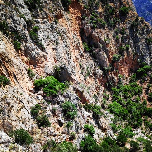 Climbing_Leonidio_Mignonette_072424_966