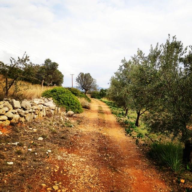 Hiking_Ermionida_Ermioni_Asprovouni_Profitis_Elias_165435_306