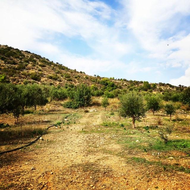 Hiking_Ermionida_Ermioni_Asprovouni_Profitis_Elias_165452_000
