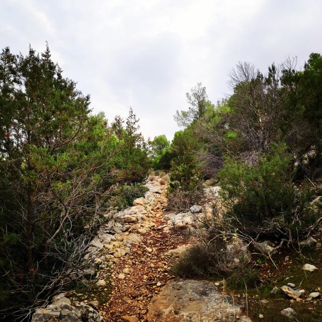 Hiking_Ermionida_Ermioni_Asprovouni_Profitis_Elias_165833_300