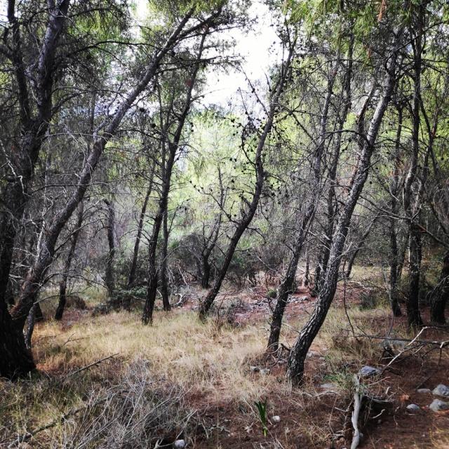 Hiking_Ermionida_Ermioni_Asprovouni_Profitis_Elias_170034_855