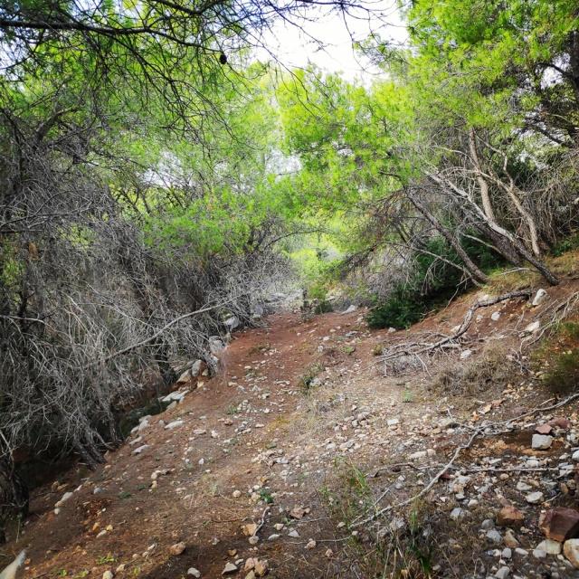 Hiking_Ermionida_Ermioni_Asprovouni_Profitis_Elias_170050_308