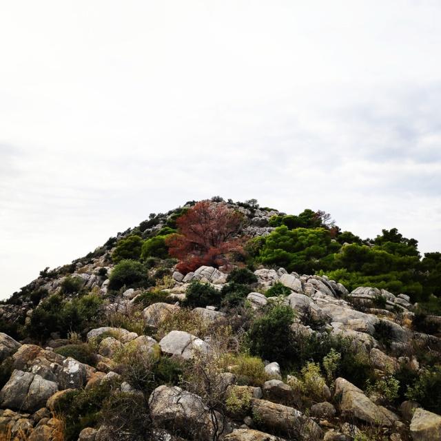 Hiking_Ermionida_Ermioni_Asprovouni_Profitis_Elias_170309_286