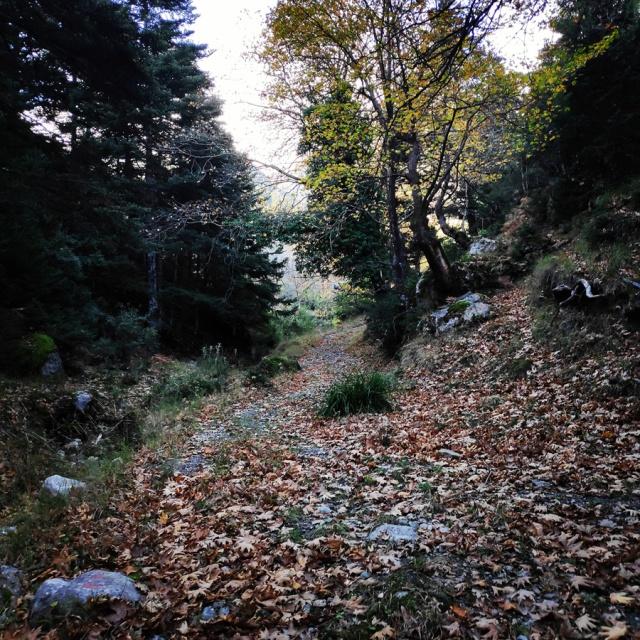 Hiking_Parnonas_Greece_203320_050