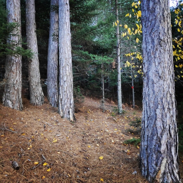 Hiking_Parnonas_Greece_203511_529
