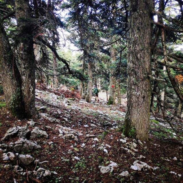 Hiking_Parnonas_Greece_211830_589